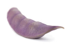 Purple long bean. Purple bean vegetable isolated on white background Stock Images