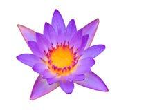 Purple lotus. Isolated on white background Stock Photos