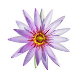 Purple lotus flower isolated Royalty Free Stock Photos