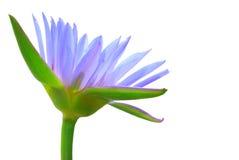 Purple lotus isolated. On white Stock Photos