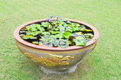 Purple lotus in  pots Royalty Free Stock Image