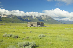 Purple lupine surrounding deserted cabin with mountains in Centennial Valley, near Lakeview, MT Stock Photos