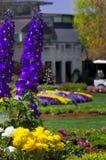 Purple Lupines Stock Photography