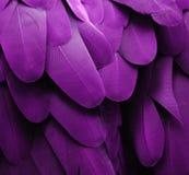Purple Macaw Feathers Stock Image