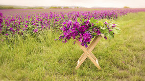 Purple mallow on a stool in front of flower field. Beautiful purple mallow on a stool in front of flower field Stock Photos