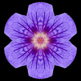 Purple Mandala Flower Kaleidoscope Isolated on Black Royalty Free Stock Photography