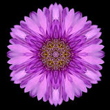 Purple Mandala Flower Kaleidoscope Isolated on Black Stock Images