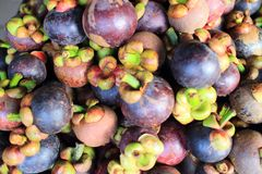 Purple mangosteen Stock Photography