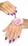 Purple manicure and pink rose Royalty Free Stock Photos