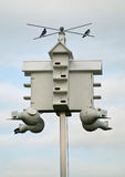 Purple martin bird Stock Photography