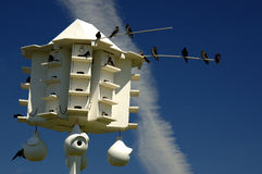 Purple Martin Bird House Stock Images