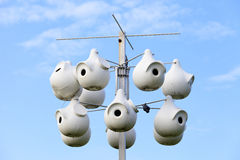 Purple Martin Colony Gourds Royalty Free Stock Images
