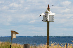 Purple Martins, Amherst Island, Ontario, with Wind Turbines in the background Stock Image