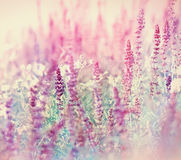 Purple meadow flower Stock Images
