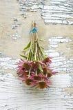 Purple medical perennial cone flowers Echinacea Purpurea bunch Royalty Free Stock Photography