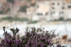 Purple medicinal flowers for text stock images