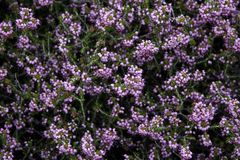 Purple medicinal flowers background stock photo