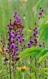 Purple met monarch stock afbeelding
