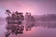 Purple misty sunrise over wild lake in forest Royalty Free Stock Image