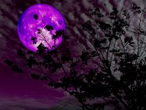 Purple moon back silhouette branch tree sunset. Elements of this image furnished by NASA Royalty Free Stock Photos