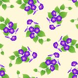 Purple Morning Glory on Beige Ivory Background. Vector Illustration.  vector illustration