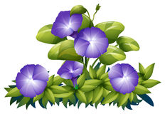 Purple morning glory in the bush. Illustration stock illustration