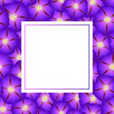 Purple Morning Glory Flower Banner Card Border. Vector Illustration.  stock illustration
