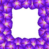 Purple Morning Glory Flower Border. Vector Illustration.  royalty free illustration