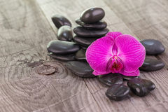 Purple Moth orchid and black stones on weathered deck Stock Photos