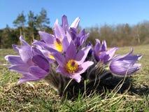 Purple Multi Petal Flower on Grass Stock Photo