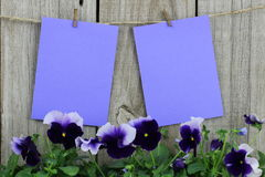 Purple note cards hanging on clothesline with purple flower border Royalty Free Stock Photo