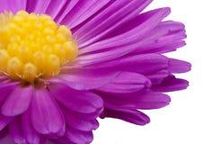 Purple och yellow Arkivbilder