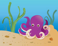 Purple octopus. In the sea Stock Images