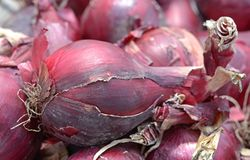 Purple onion bulb Royalty Free Stock Images