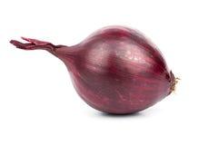 Purple onion Royalty Free Stock Photos