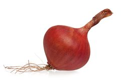 Purple onion Royalty Free Stock Photos