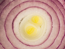 Purple onion slice texture Royalty Free Stock Photography