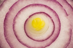 Purple onion slice texture Royalty Free Stock Images
