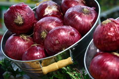 Purple Onions. Fresh purple onions on sale in a grocery store Stock Images