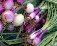 Purple_Onions Stock Fotografie