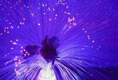 Purple optical fibers as a plant royalty free stock photography