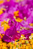 Purple and orange flower lying on pathway Royalty Free Stock Photography