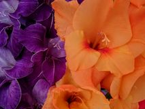 Purple and Orange Flowers close up stock photo
