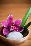 Purple Orchid Royalty Free Stock Photos