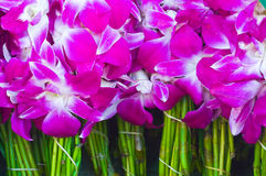 Purple orchid Stock Image