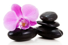 Purple orchid. On white background Stock Photos