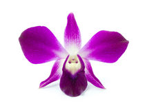 Purple Orchid. On white background stock photo