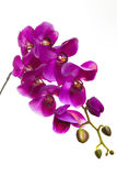 Purple orchid artificial flower. Isolated on white background Royalty Free Stock Image