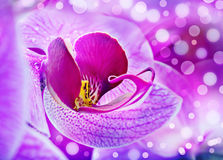 Purple orchid background Stock Image