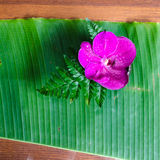 Purple orchid on the banana leaf Royalty Free Stock Image